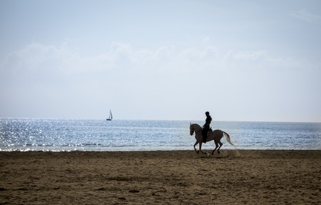 caballo de mar: Equitaci�n silueta en la playa