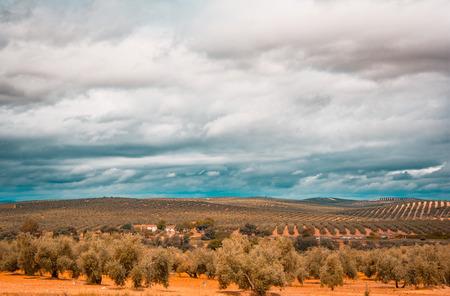 Plantage von Olivenbäumen in Jaen, Andalusien. Spanien Standard-Bild