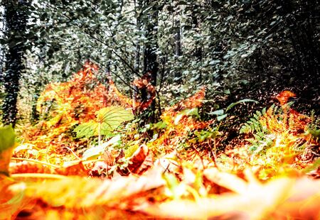 Raging and dangerous tropical forest fire - digital composite.