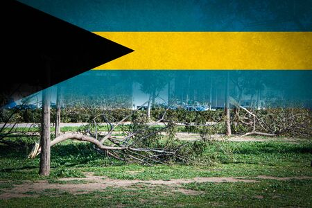 Trees broken by heavy storms and flag of Bahamas.