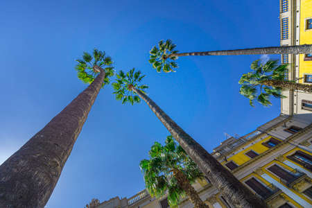 Bottom view of palm trees and building facade in Plaza real, Barcelona. 版權商用圖片