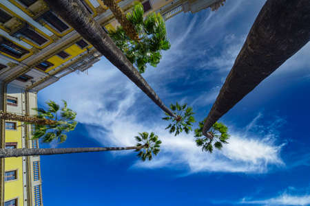 Bottom view of palm trees and building facade in Plaza real, Barcelona against a cloudy sky