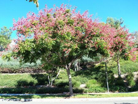 A pink flowering tree Imagens