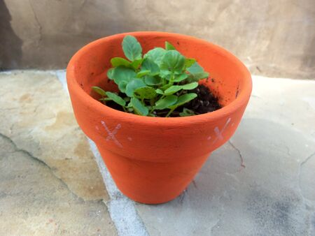 A potted plant Stock Photo - 26666913