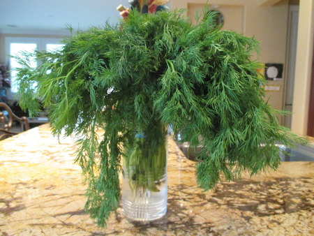 dill: Dill in a  glass of water Stock Photo