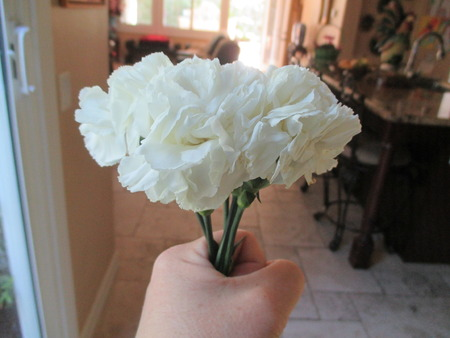 A woman holding a carnation