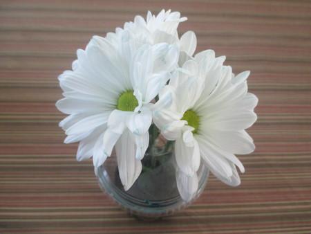 white daisies: Three white daisies on a table