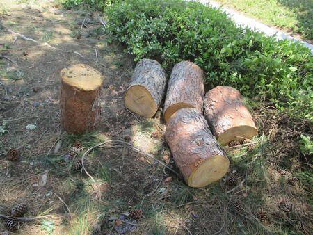 A cut tree on a residential street Фото со стока - 57692037