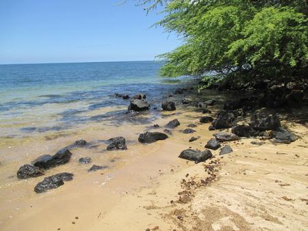 Tree growing on a brown sand Hawaiian beach