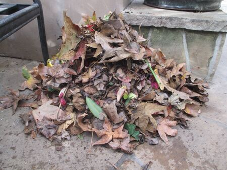 A pile of brown leaves