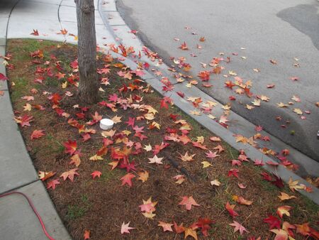 yelloow: Fallen red and yellow leaves on a wet residential street
