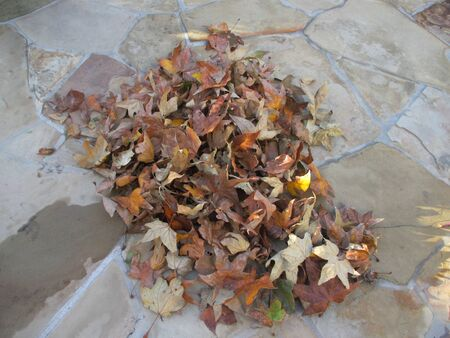A pile of fallen brown leaves on wet sandstone pavement