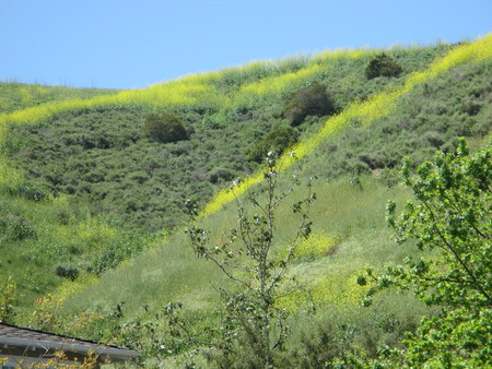 small yellow flowers blooming on top of a mountain Stockfoto