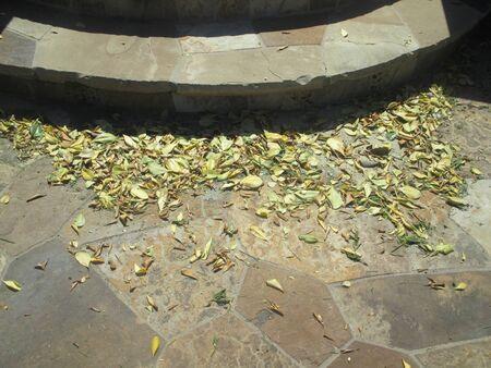 dried leaves near stone steps