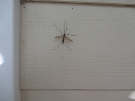 dragon fly on yellow siding of a house Stockfoto