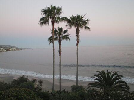 three palm trees along California beach
