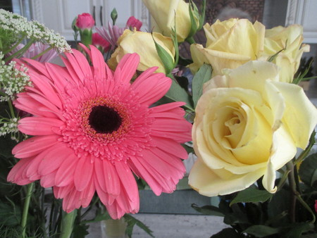 A large pink daisy and a yellow rose Stockfoto