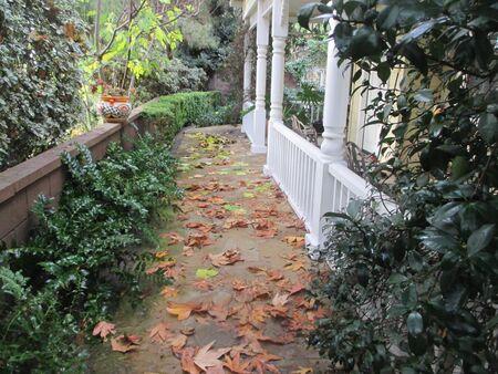 Fallen leaves on a sandstone walkway