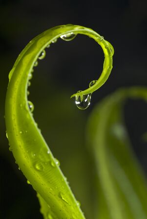 Water drops with fern leaf  photo