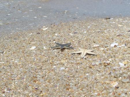 fish star: golpes pescados de la estrella contra olas ventilador sube zona de la playa junto al mar, una playa es Bangsan, atracci�n tur�stica muy popular es el de Tailandia, Foto de archivo