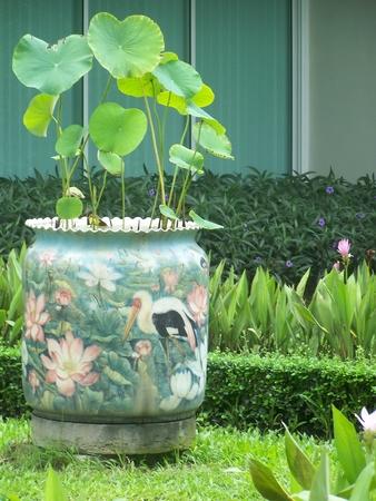 lotus classic pot in the public park , very beautiful photo