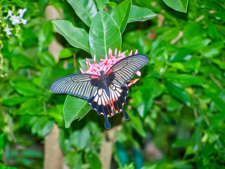 l�bulo: Butterfly tail lobe Are nectar from flowers