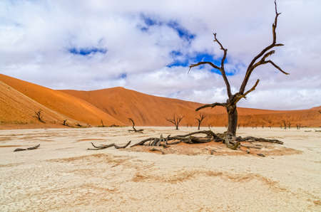 Dead camelthorn tree under a rare cloudy sky in Deadvlei, Namibia photo