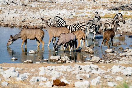 pozo de agua: Vida silvestre en una charca