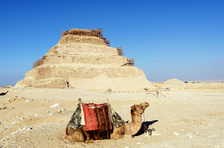 djoser: Camel with the step pyramid of Djoser in the background at Saqqara, Egypt