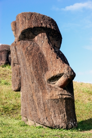 Moai at Rano Raraku quarry on Easter Island photo