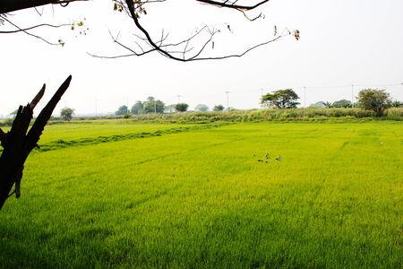 greengrass: Field