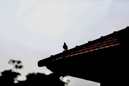 silhouette alone bird