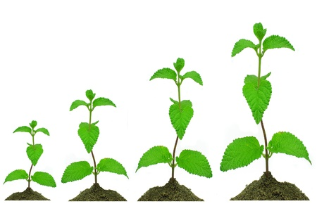 widening: growing plant Stock Photo