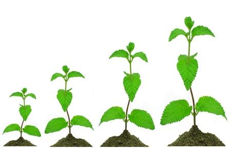 growing plant Standard-Bild