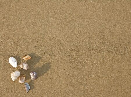 cockleshells: background from sand with cockleshells Stock Photo