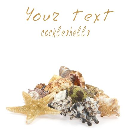 cockleshells and starfish on a white background Stock Photo - 13787184