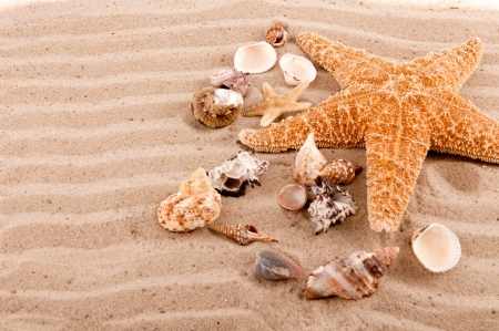 background of seashells and starfish on the beach sand photo