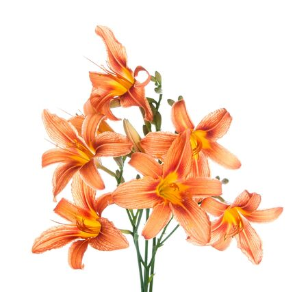 bouquet of lilies on a white background Stock Photo - 18544303