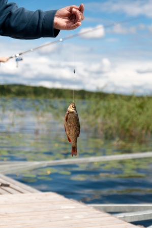 rutilus: fisherman holds a fish caught on a hook Stock Photo