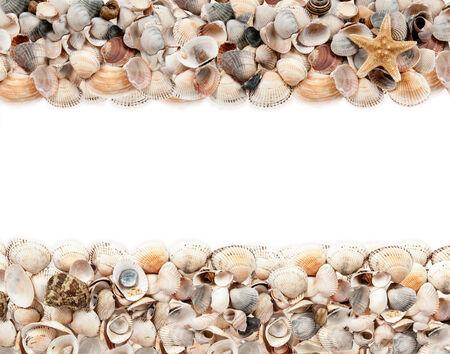 fishingnet: seashells isolated