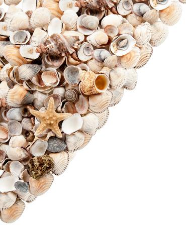 fishingnet: starfish on small shells diagonally in isolation Stock Photo