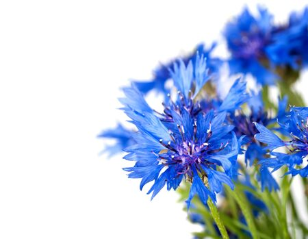 Cornflower. Bouquet of wild blue flowers. Isolated