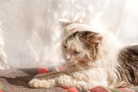 bandaged: cat the patient bandaged head Stock Photo