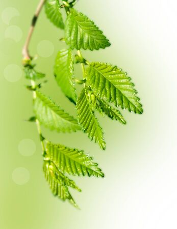 twig: green twig