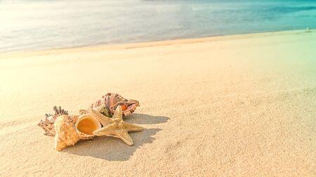 cockleshells and starfish lie ashore sea