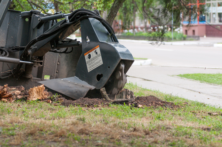 tree removal service: shredder for sawn wood