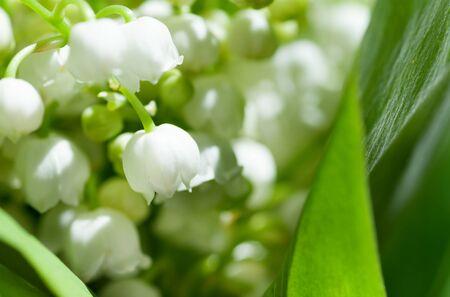 flowers Lily of the valley closeup Zdjęcie Seryjne