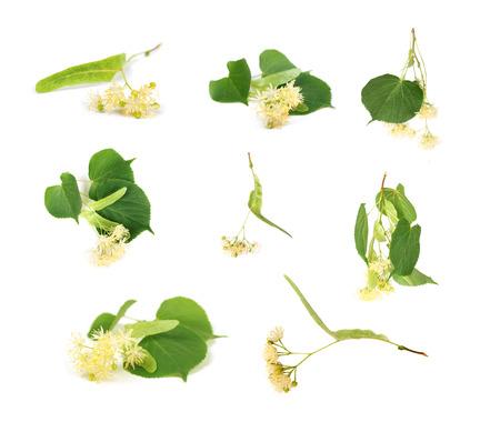set di fiori di tiglio su sfondo bianco