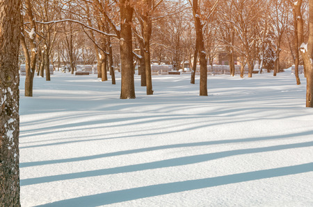 city park in winter, trees alley in the setting sun