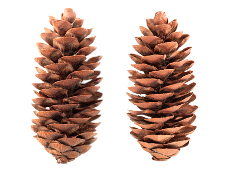 pine cone set of two pieces isolated on white background